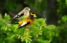 birds-images-hd-wallpaper